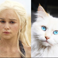 Game of Cats - varianta cu pisici a serialului de succes Game of Thrones