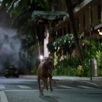 Godzilla revine - Vezi noul trailer in care monstrul radioctiv vrea sa distruga lumea