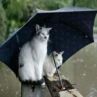 Articole despre Filme - Vreme ploioasa in weekend - filme de vazut cand e frig afara