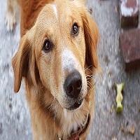 """Stiri despre Filme - 24 de caini vor putea fi adoptati la Grand Cinema & More, odata cu premiera filmului """"Cainele, adevaratul meu prieten"""""""
