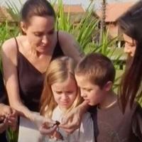 Stiri despre Filme - Angelina Jolie mananca insecte alaturi de copiii ei